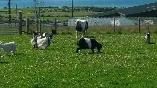Tweedle and pearl - Picture of Ardmore Open Farm & Mini Zoo