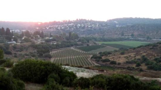Givat Yeshayahu, Israel: The view from our winery - over looking the Ella valley