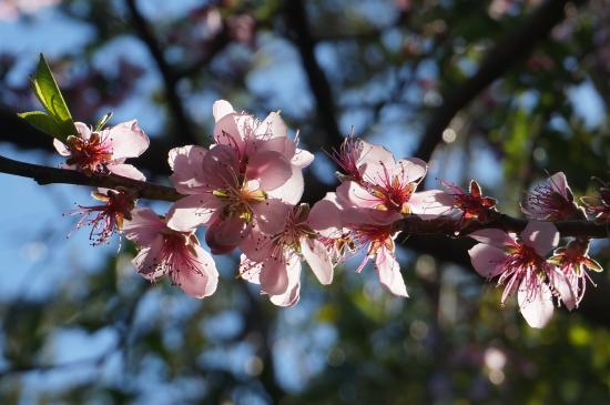 Maleny Hills Motel: Flowering trees