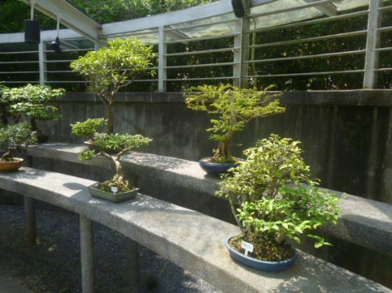 Dans les jardins botaniques photo de jardin botanique de for Au jardin singapore botanic gardens