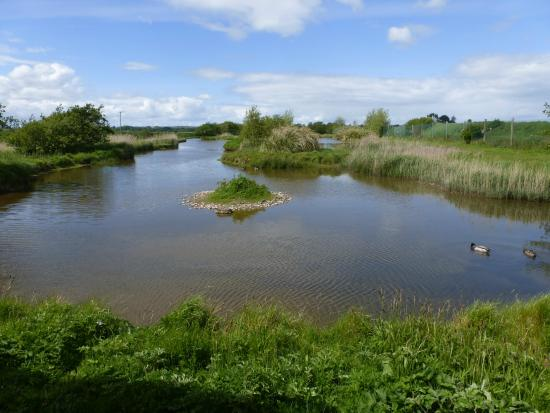 Wexford Wildfowl Reserve: Wildfowl Centre