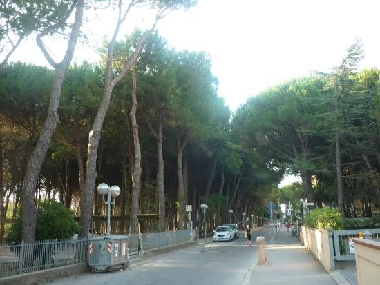 Pineta di Pinarella e Tagliata