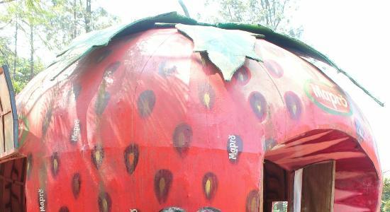 Mapro Garden giant strawberry & giant strawberry - Picture of Mapro Garden Mahabaleshwar ...