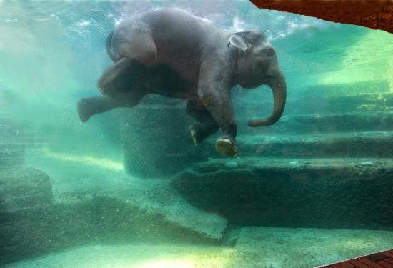 Zoo zurich switzerland top tips before you go tripadvisor - Oerlikon swimming pool ...