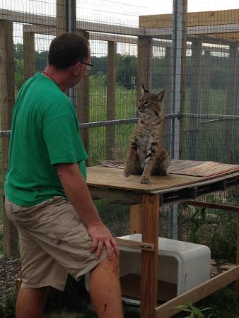 Wildlife Discovery Center: Curator Rob Carmichael and Boris the Bobcat