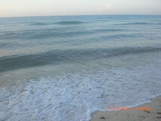 Cabo San Lucas Seaweed 2019