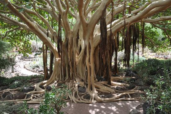 Que de cactus ! - Picture of Jardin Canario, Las Palmas de Gran Canaria - Tri...