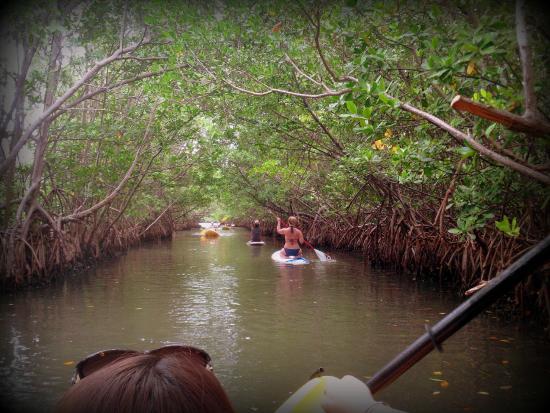 Blue Moon Outdoor Center: the mangroves
