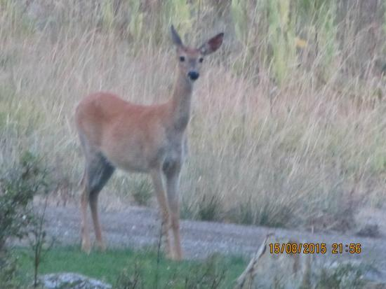 The Master Suite Bed and Breakfast: Deer