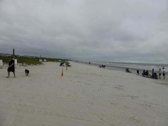 Crescent Beach Faixa De Areia E Vegetação