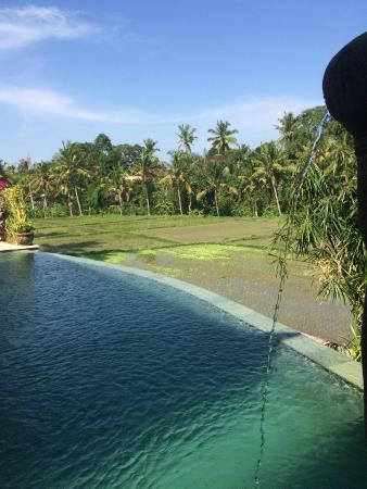 Bamboo Village Le Sabot Ubud: Pool on rice fields