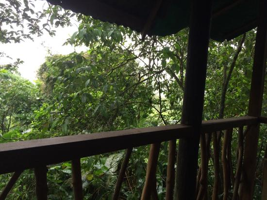 Posada Andrea Cristina: Tree house views
