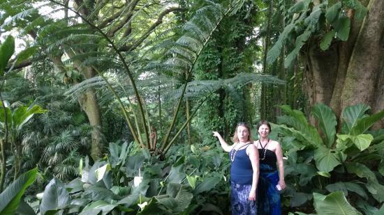 Lovely Hawaii Tropical Botanical Garden: Giant Fern