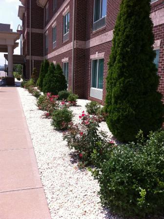 Holiday Inn Express Carrollton: Landscaping