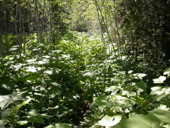 Greenstone Ridge Trail: Greenstone - lookout Louise to Franklin