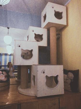 arbres chat sur mesure photo de chat mallows cafe paris tripadvisor. Black Bedroom Furniture Sets. Home Design Ideas