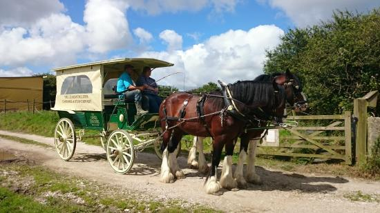 The Lizard Stallions Shire Experience Days: Carriage driving experience