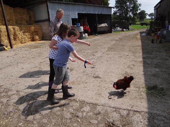 Alstonefield, UK: Feeding the chickens