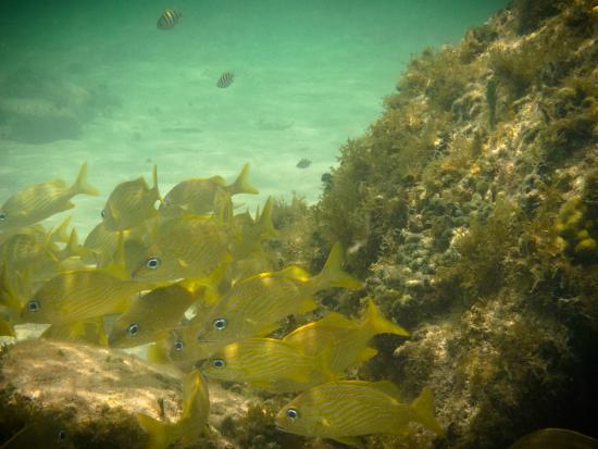 Playa Palancar: A tan solo 10 metros de la playa
