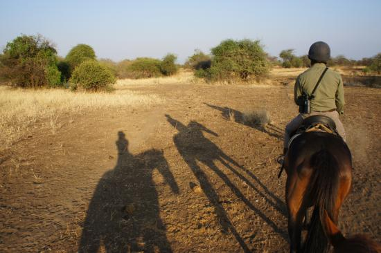 Manyara Ranch Conservancy: Riding Safari