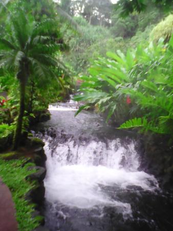 Tabacon Thermal Resort & Spa: Aguas termales
