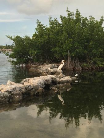 Kon-Tiki Resort: Local Bird