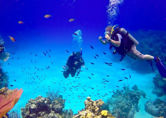 Little Cayman Beach Resort: 100' visibility!