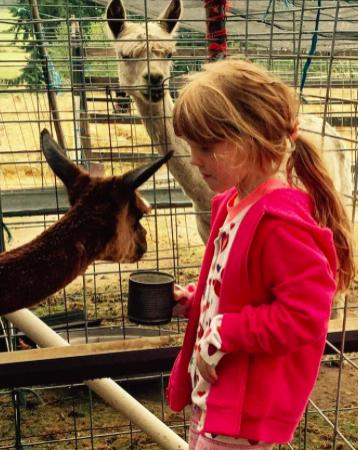 Clinton, WA: Taylor feeding alpacas
