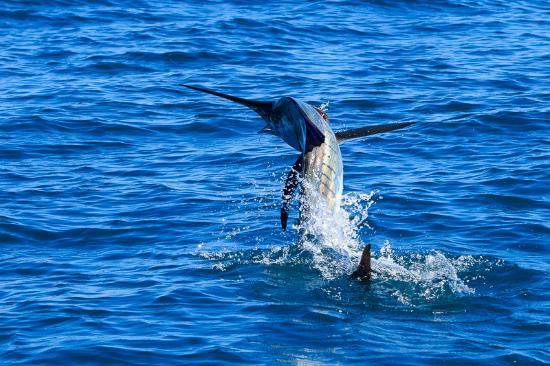 Broome Billfish Charters