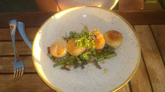 Bin on the Lake Wine Bar & Restaurant: Scallops