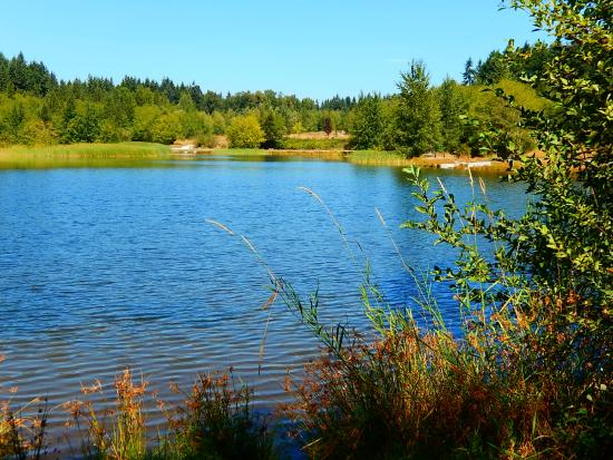 Surrey, Canada: the lake