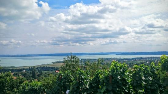 Szent Donat Pince - Vine cellars