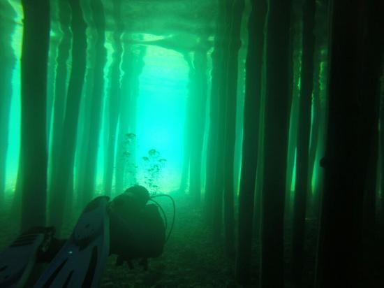Diving Center Amfora