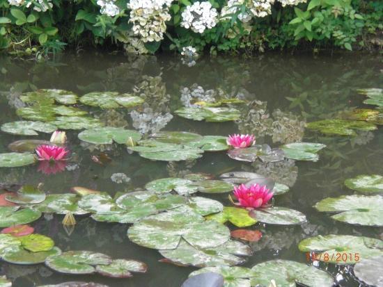 Jardin du peintre Andre van Beek : nénuphars