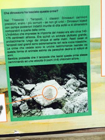 Orme di Dinosauro presso Casera Casavento