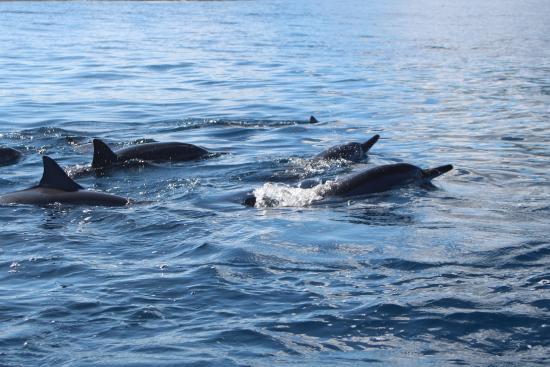 Les Lataniers Bleus: Sortie Dauphins