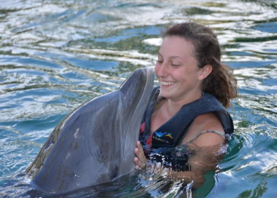 dolphin quest oahu prices