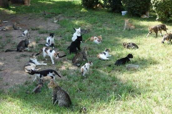 Ozkaymak Falez Hotel : вонючие кошки