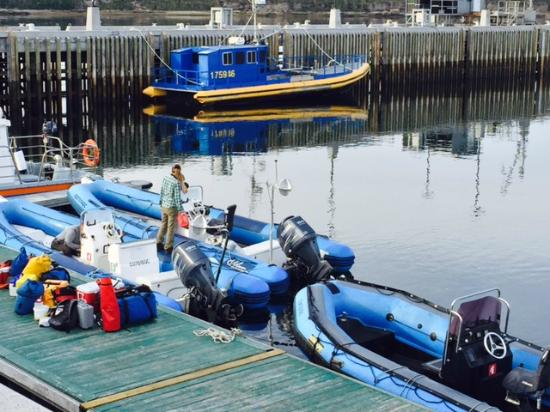 Mingan Island Cetacean Study Research Station : sortie zodiac