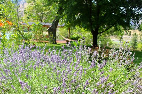 Mackay Bar Outfitters & Guest Ranch: Beautifully groomed grounds at Mackay Bar Ranch