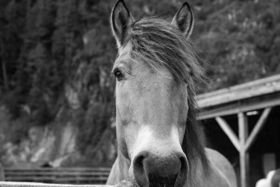 Clayoquot Sound, كندا: Horse