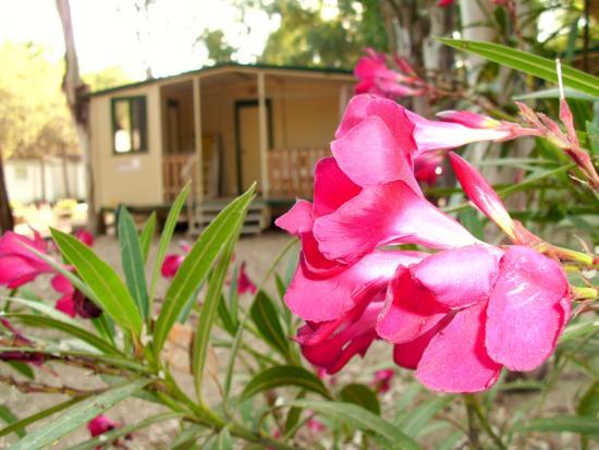 Camping Iscrixedda