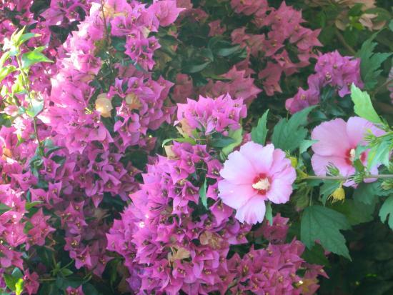 Hotel Il Girasole: Flowers