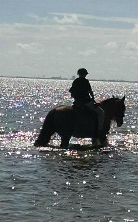 C ponies horseback riding by skyway bridge st pete for Places to go horseback riding near me