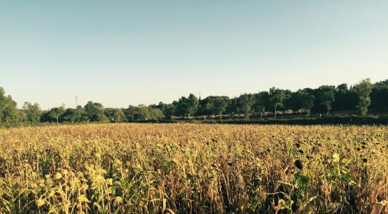 Agriturismo Pian di Cataverna: photo1.jpg