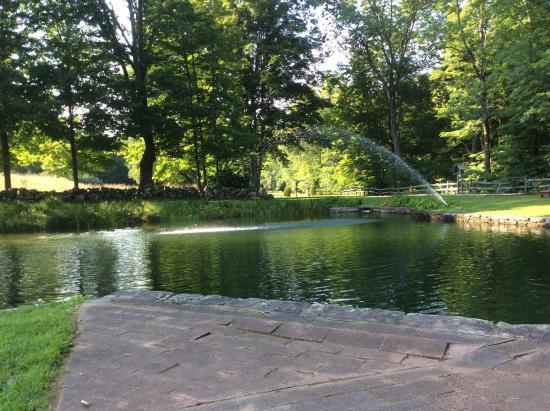 Grafton Inn: The pond
