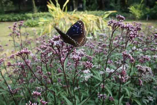 Guangxi Medicinal Botanical Garden: fjäril