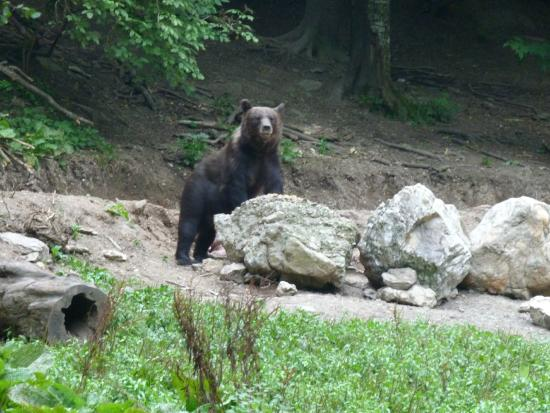 Secret Transylvania Guest House: Bear seen on the bear watch in the deep forest