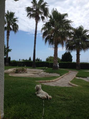 Habitat Playa Romana Village : Jardin desde el apartamento
