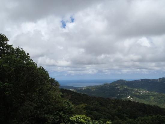 View From Aerial Tram Picture Of Rainforest Adventures